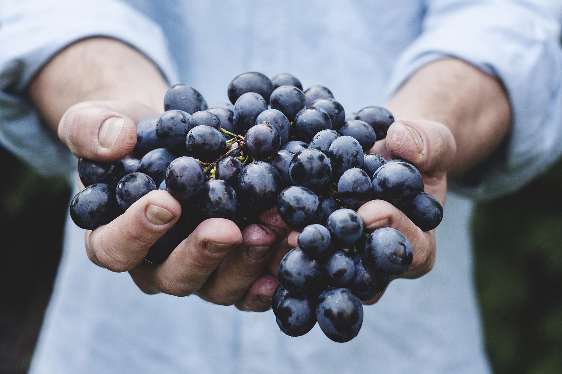 5 curiosidades sobre distribuição de alimentos
